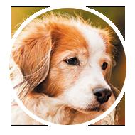 medecine_veterinaire